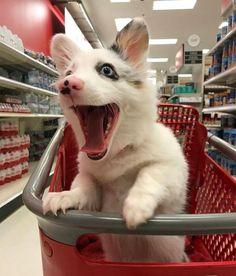 Эта собака впервые отправилась в магазин, и ей это понравилось