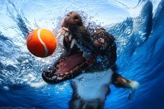Puppies underwater make for some intense and delightful shots.