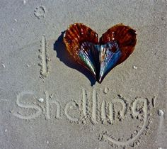 Love shelling Sanibel Island, Florida :)