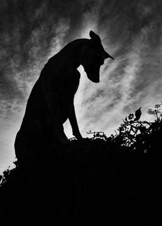 This+too+shall+pass+by+Elke+Vogelsang+on+500px