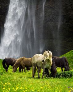 Wild Horses Iceland.... #Relax more with healing sounds: