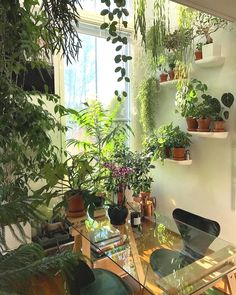 - House Plants - Garden room of house plants. Garden room of house plants. Room With Plants, House Plants Decor, Office With Plants, Small Indoor Plants, Indoor Plant Decor, Outdoor Plants, Decoration Plante, Glass Desk, Glass Room
