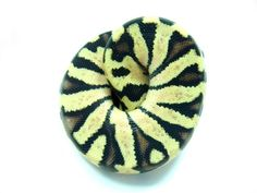 Co-Dominant Ball Python Morphs - A 2 Z Reptiles - Look at some snakes! Exotic Pets, Exotic Animals, Python Regius, Ball Python Morphs, Beautiful Snakes, Quokka, Reptiles And Amphibians, Zebra Stuff, Pastel