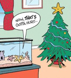 A funny holiday season picture with a christmas Star on top of a tree. A xmas humor pic, comedy cartoon and comic strip. Xmas Jokes, Funny Christmas Cartoons, Christmas Comics, Funny Christmas Pictures, Christmas Star, Funny Cartoons, Christmas Humor, Funny Pictures, Merry Christmas
