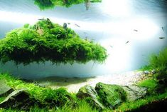 Aquascaping | Beautiful Aquascaping Photo Collection - Quertime