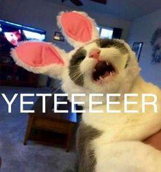 Funny Relatable Memes, Wtf Funny, Funny Posts, Funny Cute, Good Sentences, Sad Art, Funny Times, Mood Pics, Cute Baby Animals
