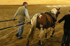 """Good site for training horse to drive...HARNESSING HORSEPOWER? - Don't """"put the cart before the horse"""". - Barnmice Equestrian Social Community"""