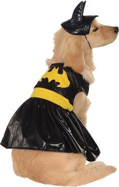 Pet Batgirl Halloween Costume--Really Cute #Halloween Costumes for Dogs http://poshonabudget.com/2014/10/really-cute-halloween-costumes-for-dogs.html via @poshonabudget
