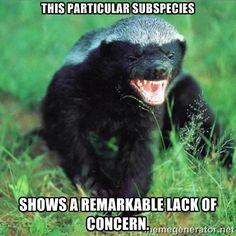 I believe I've found my spirit animal.honey badger don't care, honey badger don't give a shit!definitely found my spirit animal! Honey Badger Tattoo, Honey Badger Humor, Badass, Funny Animals, Cute Animals, Wild Animals, Nature Animals, Poisonous Snakes, Ssj3