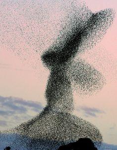 El camino del amor no es un argumento sutil. Su puerta es la devastación.  Los pájaros dibujan grandes círculos en el cielo con su libertad. ¿Cómo lo aprendieron? Ellos caen, y mientras caen les dan alas. Rumi