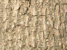 樹皮 - Google 検索