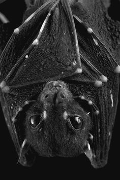 Bats, cute in their own semi-ugly way. Absolutely necessary too!