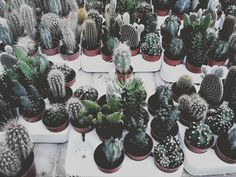 plant lovers *raises fist in the air* uniteeee✊