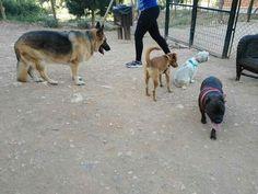 En el parque canino 05/16 Beto, Benita, Marley, Brown Shakira, Laxy, Toby, Luna