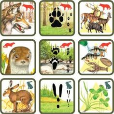 * Natuurspel! Zoek het dier bij zijn sporen en voedsel! 5-6