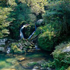 Ancient forest of Yakushima island, Kagoshima, Japan | Flickr - Photo Sharing!