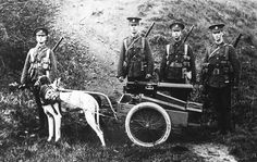 Harnessed dogs pull a British Army machine gun and ammo, 1914. These weapons could weigh as much as 150 pounds. (Bibliotheque nationale de France)