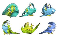 Some Parakeets for work. Edit: I now have a parakeet of my own name Mister Issues. Here's a movie of him giving kisses [link] Cute-Ass Parakeets Cute Animal Drawings, Animal Sketches, Bird Drawings, Kawaii Drawings, Cute Drawings, Animals And Pets, Cute Animals, Budgies, Parrots
