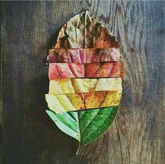 the Leaves of Fall colorful scenic leaves fall instagram instagram pictures instagram graphics