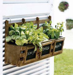 Dicas para montar uma horta em casa #horta #sustentabilidade