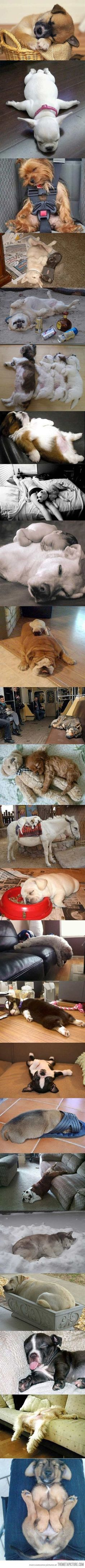 Sleepy doggies. So stinkin cute! - Click image to find more Humor Pinterest pins