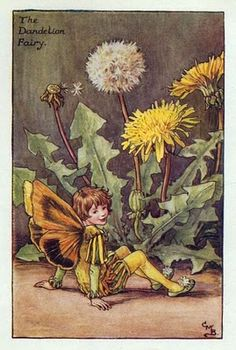 I don't like dandelions, but I like this little guy.