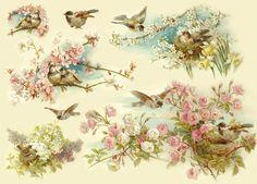 Бумага рисовая для декупажа, Stamperia, 48х33 см, Птички на цветущих ветках