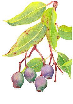 Gum tree branch print from original watercolour by Zoya Makarova