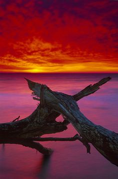 ~~Brokentree2 ~ a tree falls 80 feet off a cliff, Chesapeake Bay by beforethecoffee~~
