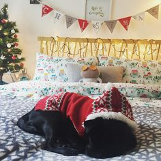 Sleepy Christmas Pup