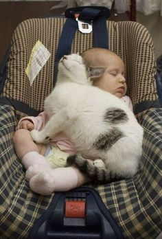 I can almost hear this cat purring.....who needs a blanket when you have a cozy kitty?