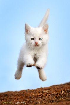 Prendiamo esempio dall'energia dei #gatti #cats # kitty
