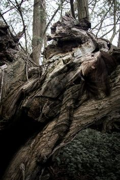 """New photoshoot in the woods for my new project """"Camouflage""""! So happy with the results! #camouflage #woodland"""