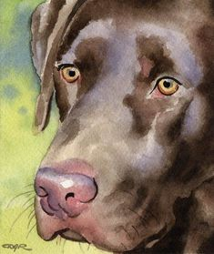 Chocolate Lab Painting Dog 8 x 10 Art Print Labrador Retriever Signed DJR Most Popular Dog Breeds, Labrador Retriever Dog, Labrador Puppies, Corgi Puppies, Watercolor Animals, Watercolor Painting, Watercolors, Tier Fotos, Dog Signs