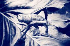 Market Dashboard - #eyeemmarket #eyeem #photography #blackandwhite #grasshopper #sepia #gardendecor #Plants #gardens #gardenphotography #canont3i #canondslr #brittphotogphotography #getty #gettyimages #gettyeyeemcollection