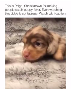 funny dog memes with captions . Cute Funny Dogs, Funny Dog Memes, Funny Dog Videos, Funny Animal Memes, Cute Funny Animals, Pet Memes, Cat And Dog Memes, Cute Animal Videos, Cute Animal Pictures