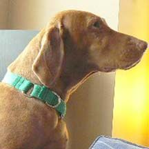 Picture of How To Make A Martingale Dog Collar