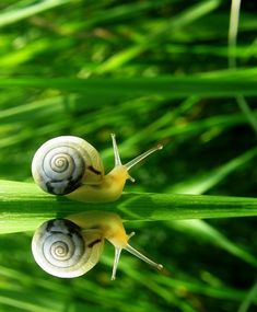 #snail #reflection #green