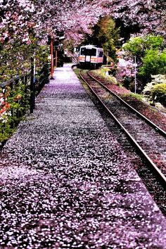 "lifeisverybeautiful: ""Cherry Blossom, Okayama, Japan Arrival in spring by Minoru Matsumura "" What A Wonderful World, Beautiful World, Beautiful Places, Beautiful Scenery, Amazing Places, Places To Travel, Places To See, Trains, Okayama"