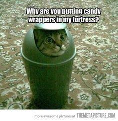 Funny cat in dustbin