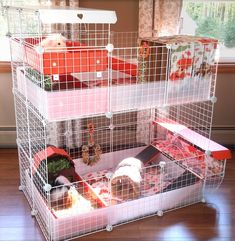 Stop by our website for more information on these stylish sturdy and easy to clean stacked cages. We think you'll agree that our latest creation is the perfect space-saving solution for separated groups. Diy Guinea Pig Cage, Guinea Pig House, Pet Guinea Pigs, Guinea Pig Care, Hedgehog Cage, Hedgehog Pet, Bunny Cages, Rabbit Cages, Guine Pig