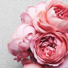 Maintaining a flower garden is even painless than planting one Little Flowers, Pretty Flowers, Pink Flowers, Beautiful Flowers Images, Flower Images, Peonies And Hydrangeas, Pink Peonies, Wallpaper Nature Flowers, Blooming Flowers