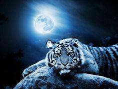 Wild cat't