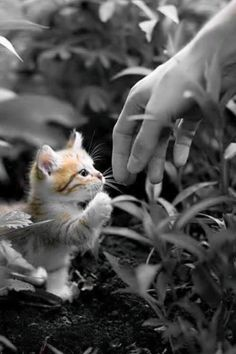 45 Cats and Kittens Pictures