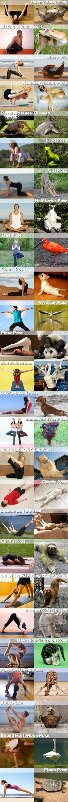 yoga pose - Dump A Day Animal Pictures, Funny Pictures, Do Exercise, Exercise Humor, Yoga Humor, Animal Yoga, Dump A Day, Types Of Yoga, Cute Funny Animals