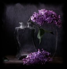 Gorgeous still life photography. Purple Love, All Things Purple, Shades Of Purple, Deep Purple, Purple Flowers, Purple And Black, Pink Purple, Purple Stuff, Color Of The Day