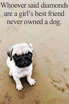 Diamonds can make you smile, but dogs give you their unconditional love, cuddle sessions and puppy kisses.