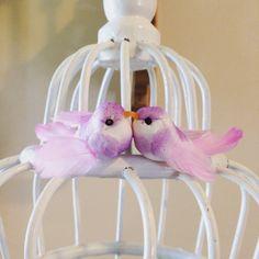 Love birds bird cage