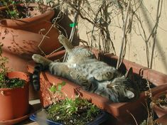 148 Cat-Plants You Probably Shouldn't Water Funny Cat Photos, Funny Cats, Funny Animals, Cute Animals, Rare Cats, Cats And Kittens, Cat Plants, Warm Bed, Cat Flowers