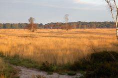 Kalmthoutse Heide - Belgium (Made by: Jill Caty - outofthewoods.be)